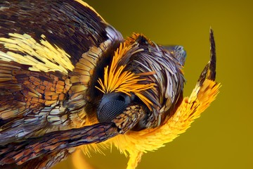 Extreme sharp and detailed view of colorful moth