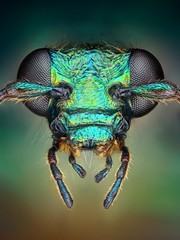 Extreme sharp and detailed view of green metallic bug