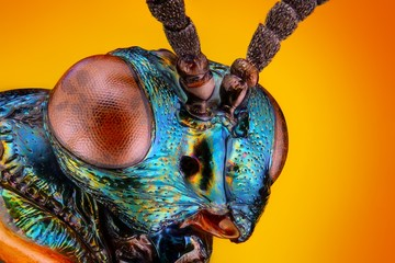 Extreme sharp and detailed view of small metallic wasp