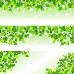 新緑 葉 シャボン玉