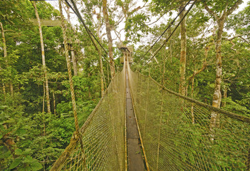 Canopy Walkway in the Rain Forest