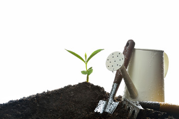 Young plant and gardening tools isolated on white background.