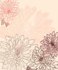 Hand drawn chrysanthemum