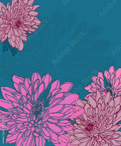 Hand drawn chrysanthemum