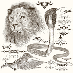 Set of hand drawn detailed animals and flourishes in vintage sty