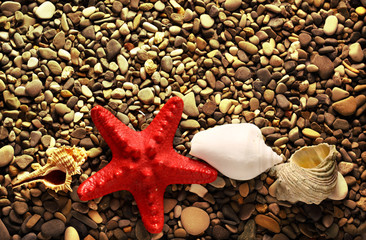 Seastar on pebbles