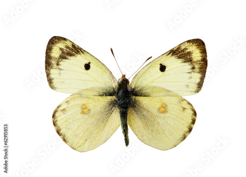 butterfly isolated on the white