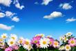 Blumenbeet vor blauem Himmel