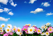 canvas print picture - Blumenbeet vor blauem Himmel