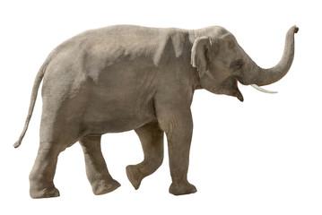 Fröhlicher Elefant auf weiß
