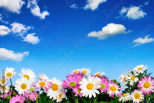 canvas print picture Blumenbeet vor blauem Himmel