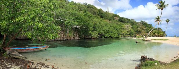 rivière et mangrove de république dominicaine