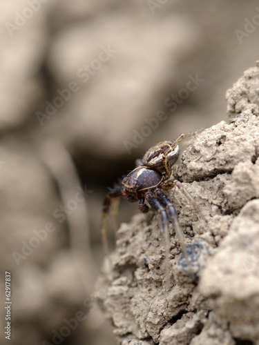 Spider on soil