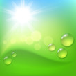 Green abstract background with drop of dew and sun