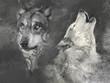 Wolfs, handmade illustration on grey background