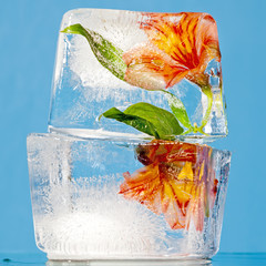 Flowers in Ice Blocks