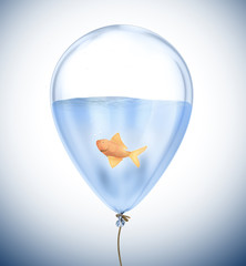 Small goldfish inside a balloon