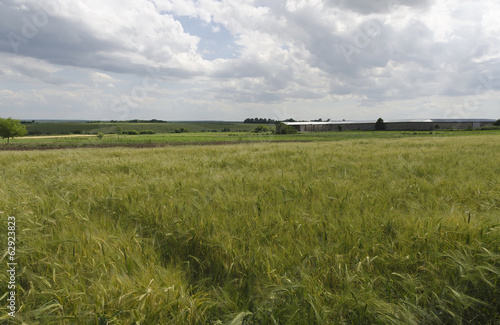 Summer-time landscape with wheat field and sky