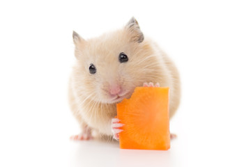 ニンジンを食べるキンクマハムスター