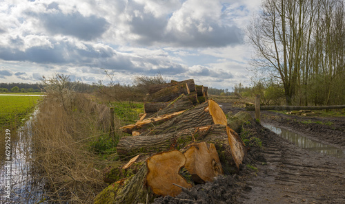 Stack of wood in a field in a cloudy spring