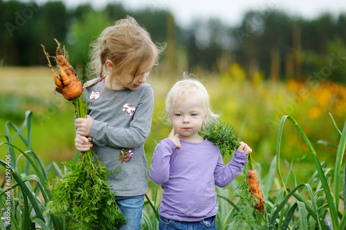 Adorable little girls picking carrots