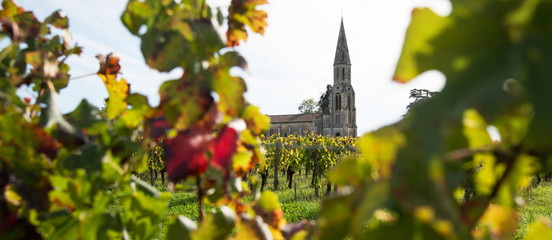 Vineyard-Landscape-Lalande de Pomerol-France