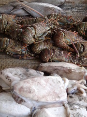 Marché Poissons Fish Market In Middle East or Africa