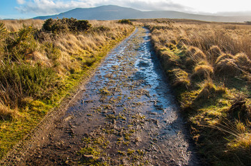Muddy path in a moor in rural Scotland
