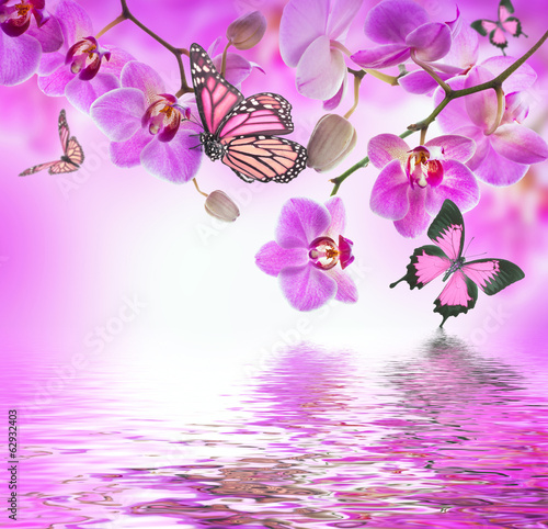 Panel Szklany Floral background of tropical orchids and butterfly