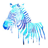 Watercolor zebra head - abstract animal illustration, white