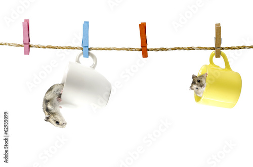 Cute two Hamster hanging on the clothesline. Isolated
