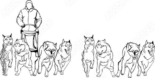 team of sled dogs, black - white version