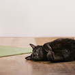Black cat lying on floor