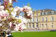 Magnolienblüte in Stuttgart - Stuttgarter Schloss im Hintergrund