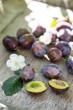 Frische Pflaumen mit Blüten vom Baum