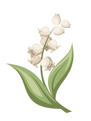 Lily of the valley flower. Vector illustration.