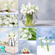 Collage of snowdrops closeup