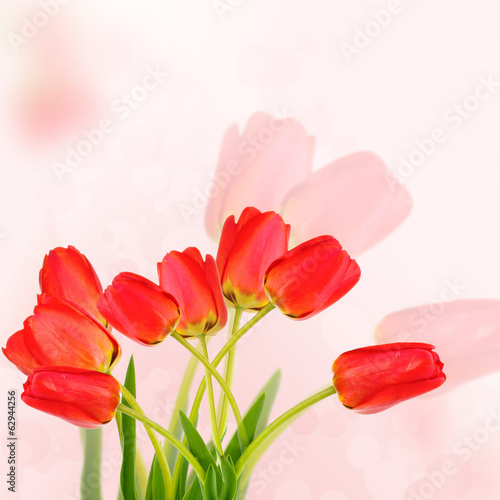 Beautiful red tulips on bright background
