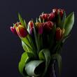 Sprink Tulips on Black Background
