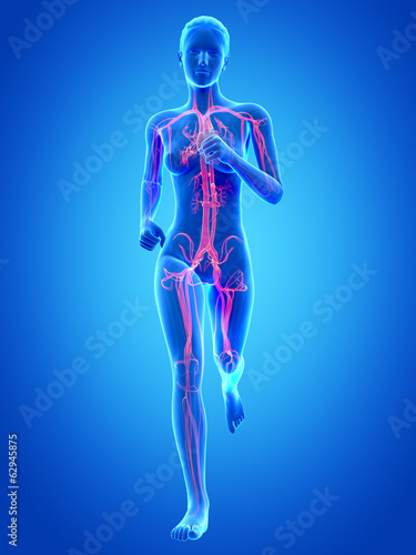 woman running - visible anatomy of the