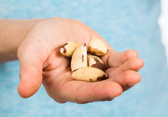 Hand holding brazil nuts