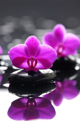 Two orchid with stones on wet background
