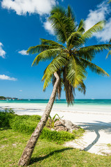 beach with palm and turquoise sea