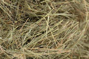 Hay, close up
