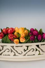 Tulpen im Balkonkasten