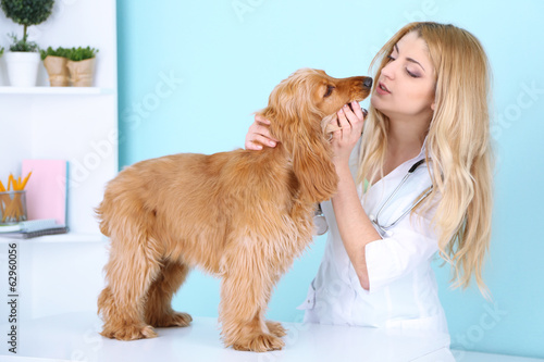 Beautiful young female veterinarian examining dog in clinic