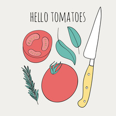 Cute tomato illustration. Doodle kitchen vector