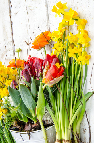 In de dag Narcis Frühlingserwachen: Tulpen, Osterglocken und Ranunkeln :)