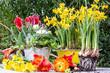 canvas print picture - Gartenarbeit im Frühling: Einpflanzen von Frühlingsblumen :)