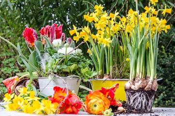 Gartenarbeit im Frühling: Einpflanzen von Frühlingsblumen :)